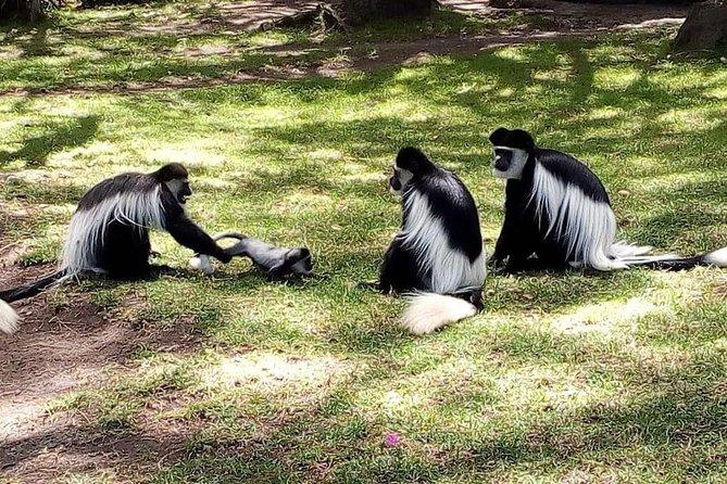 12 days(KENYA-TANZANIA): Mt Kilimanjaro   Serengeti and Maasai Mara