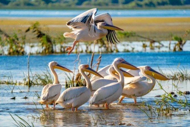 Danube Delta day trip, from Bucharest