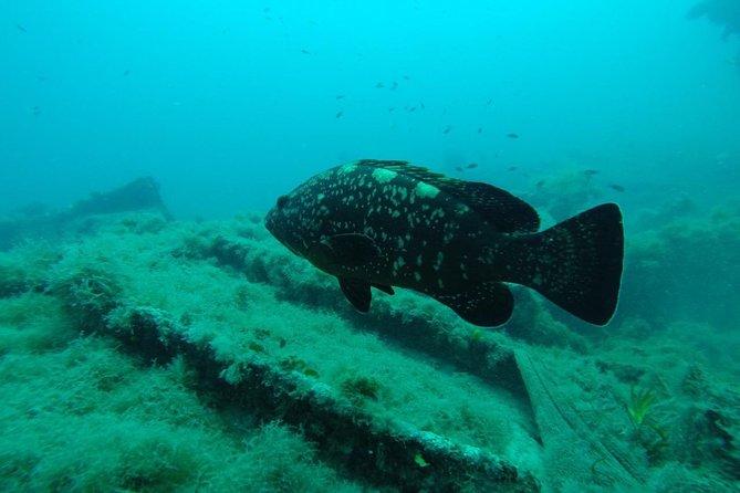 Wreck exploration Ricardo-18m (Certified diver)