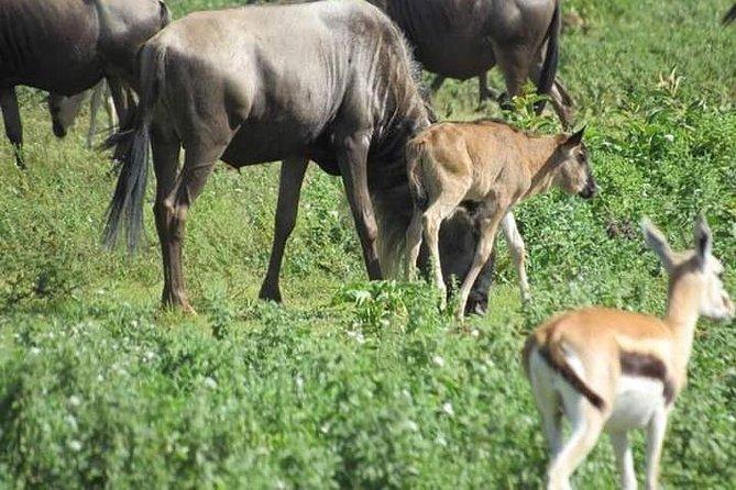 4 Days / 3 Nights Mikumi National Park & Udzungwa