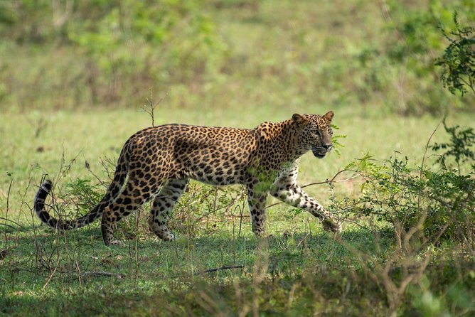 All Inclusive Yala National Park Jeep Safari from Colombo