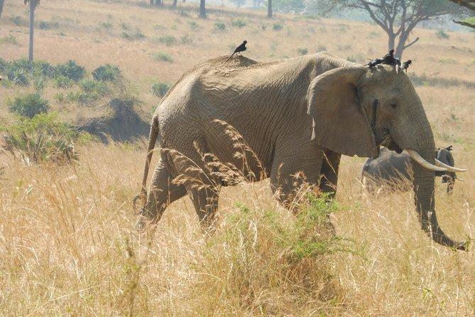 3 Days Murchison Falls Big 5 Safari