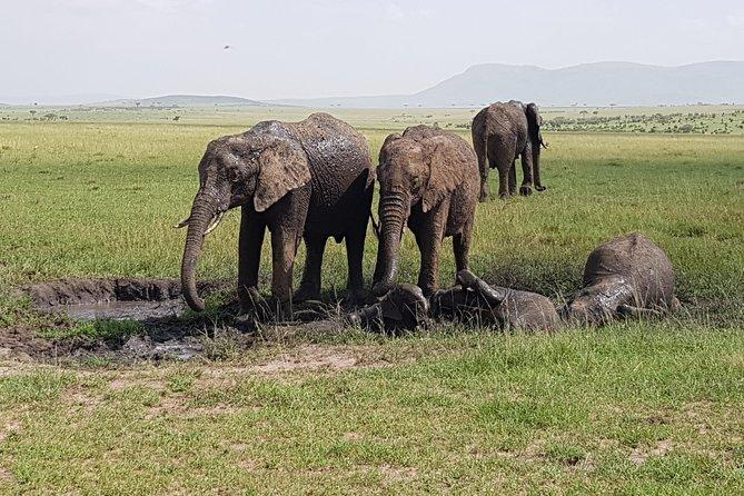 4 Days Masai Mara Migration Safari
