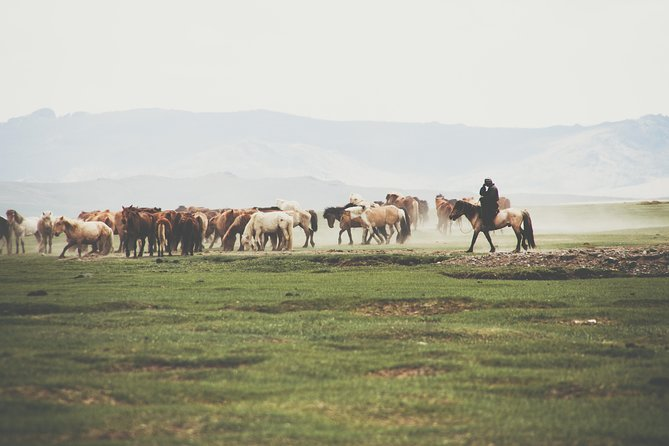 10 DAYS TOUR Gobi and central Mongolia