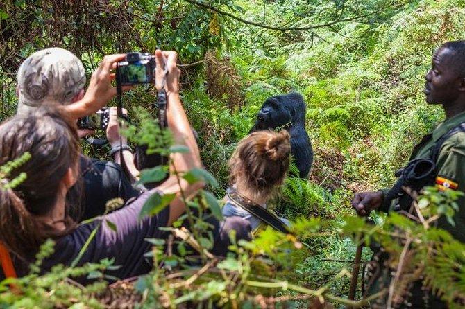 3-Day Gorilla Trekking Budget Safari in Uganda
