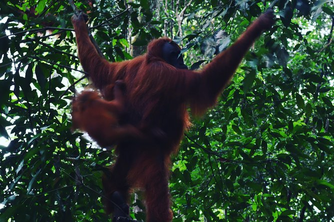 Two days and one night the orangutan experience
