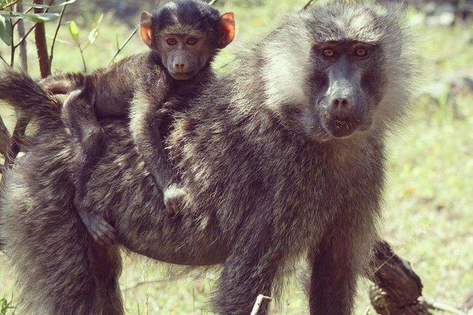 Full Day Private Safari Tour - Arusha National Park