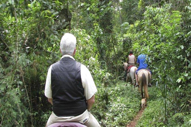 Jungle Horseback Ride in Iguazu with Guaraní Community