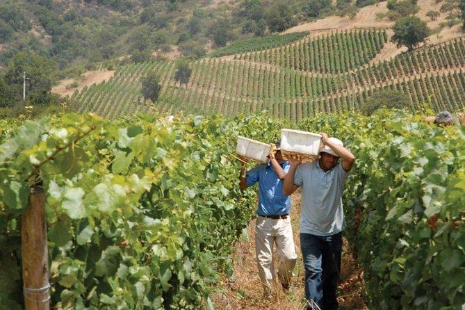 Morandé vineyard tour