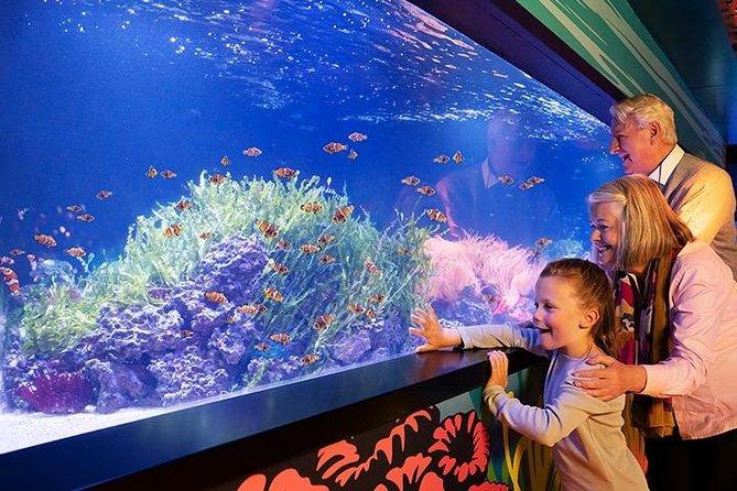 SEA LIFE London Aquarium Admission Ticket
