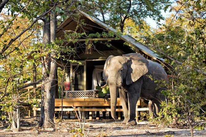 Etosha Namibia honeymoon and family safari 3 days