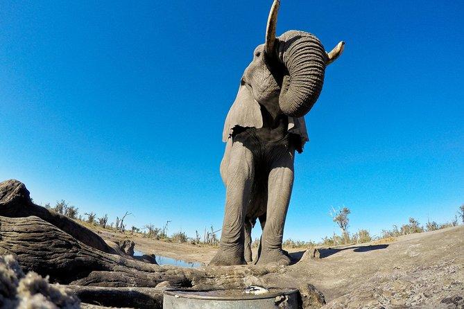 Etosha Safari Namibia Private Guided Tour - 4 days