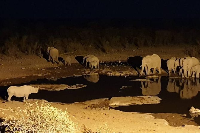 Night Rhino Game Drive and Bush Dinner from Victoria Falls
