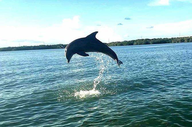 Key Largo Mangrove Private Eco-Tours