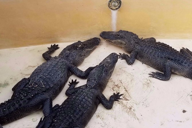 Exclusive Everglades Tour and Airboat Ride