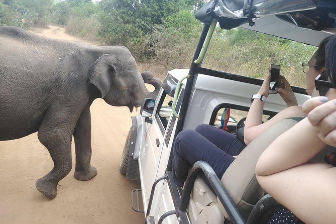 A Udawalawa safari day tour from Galle / Colombo (All inclusive tour )