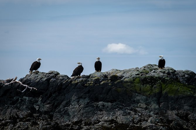 Lighthouse, Totems & Eagles Excursion