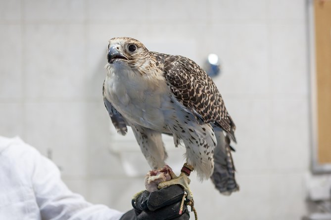 Falcon Hospital Tour with Hotel Pick up & Drop off