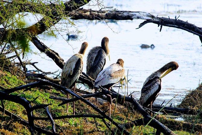 Okhla Bird Sanctuary tour in Delhi