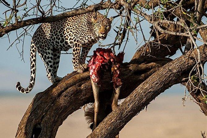 7 Days Mara/L.Naivasha/L.Nakuru/Amboseli