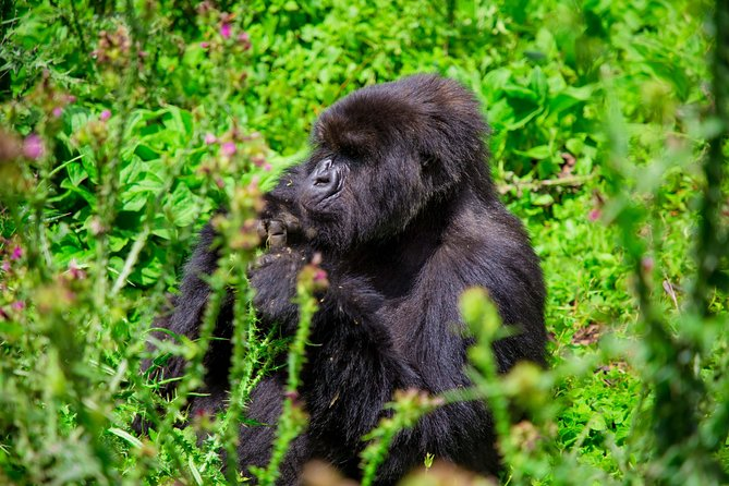 3 Days Private Adventure from Kigali with Gorilla Trekking