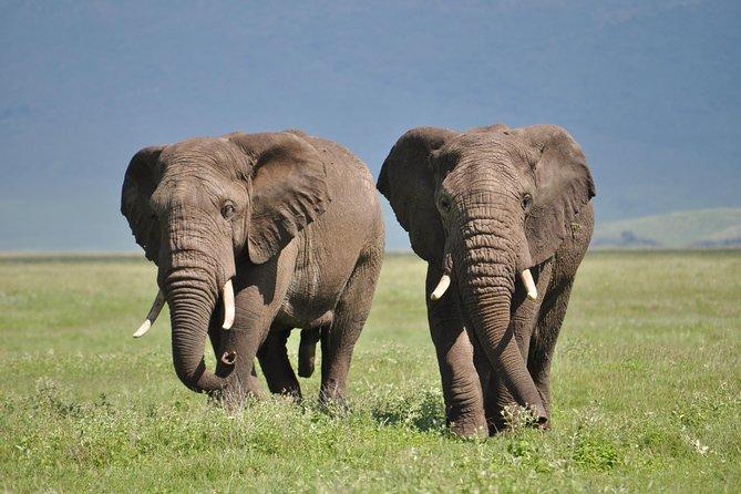 4 Days Tanzania Safari (Tarangire, 2 Nights Serengeti and Ngorongoro)