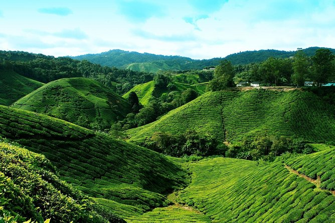 Cameron Highlands Day Tour From Kuala Lumpur - Sharing