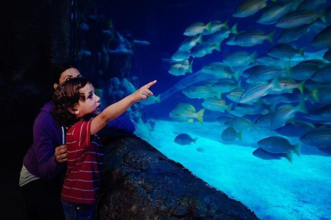 Skip the Line: SEA LIFE Blackpool Admission Ticket