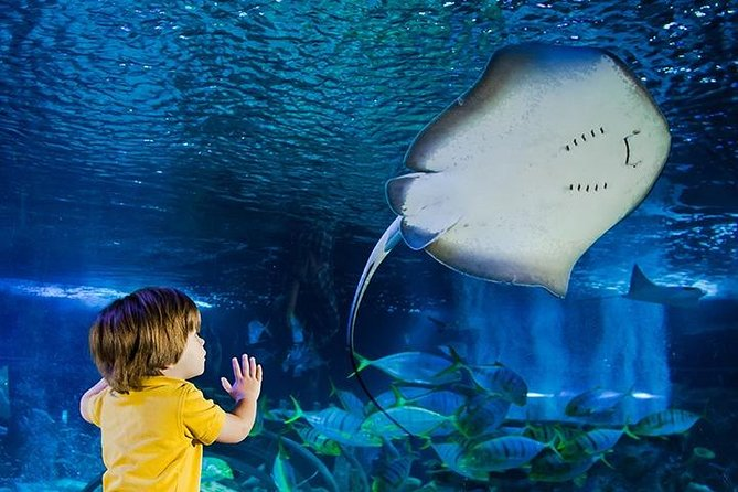 SEA LIFE Manchester Admission Ticket