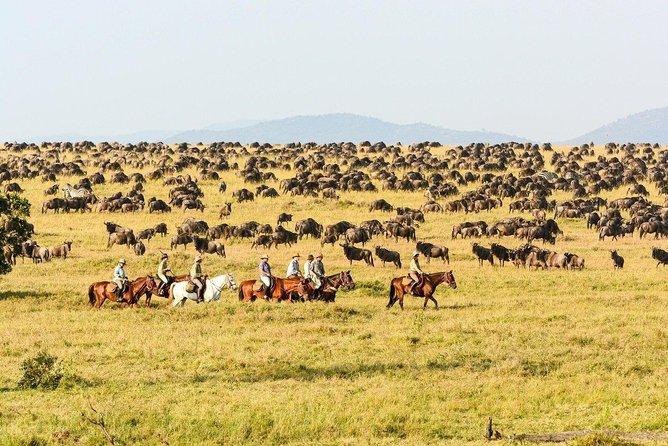 1 Day Horse Riding Safari Tanzania