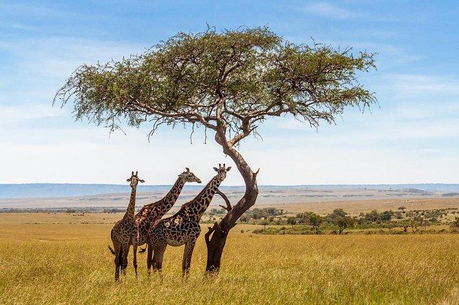A great Northern Tanzania Adventure Safari.