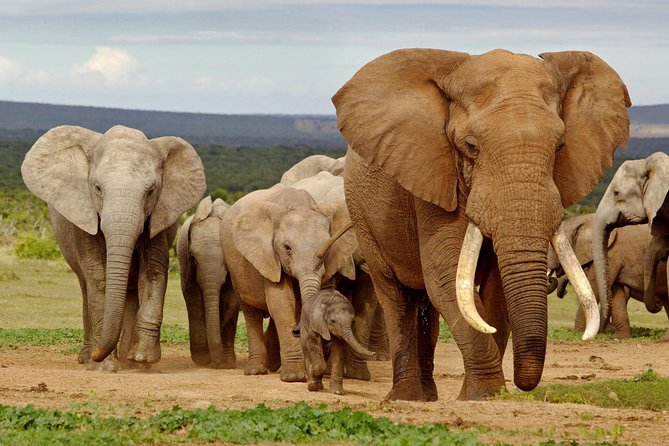 6-Day Garden Route & Addo Tour from Cape Town