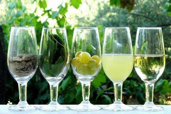 From Cádiz to Puerto Santa María in Catamaran: Visit to Winery and Wine Tasting