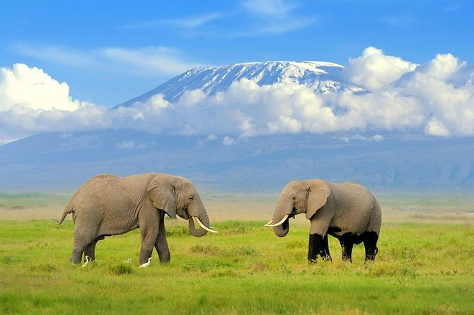 1 Day Classic Amboseli Safari