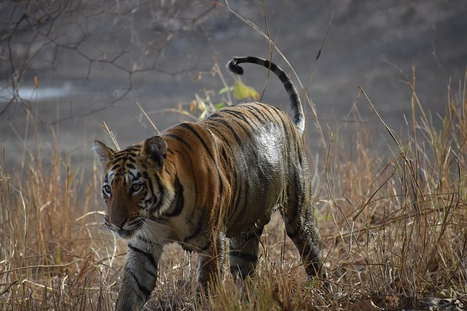 Melghat Tiger Reserve From Nagpur