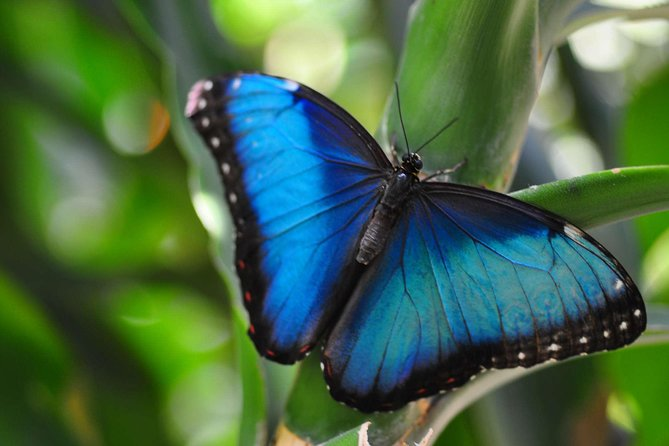 Butterfly Garden Tour in Monteverde