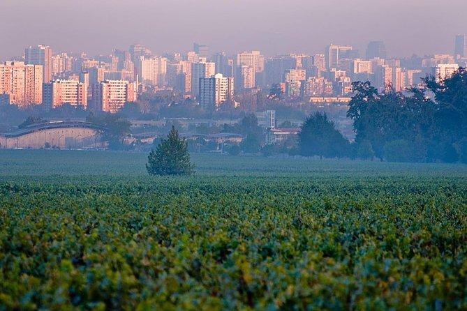 Cousiño Macul vineyard tour