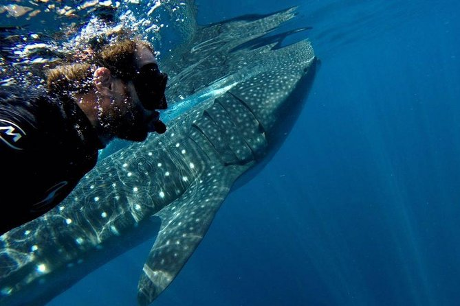 Whale-Sharks Discovery Experience