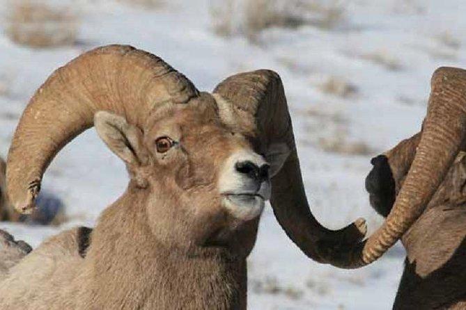 Jackson Hole & Grand Teton Park - Half-Day Wildlife Tour - Morning