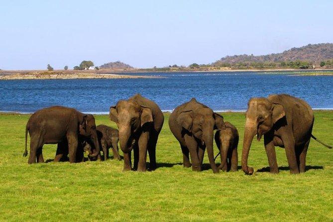 3 Day Tour from Kandy to Nuwara Eliya & Rafting at Kithulgala