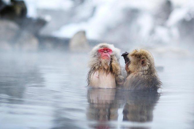 3-Day Private Tokyo and Nagano: Snow Monkeys, Tsukiji Market and Bullet Train