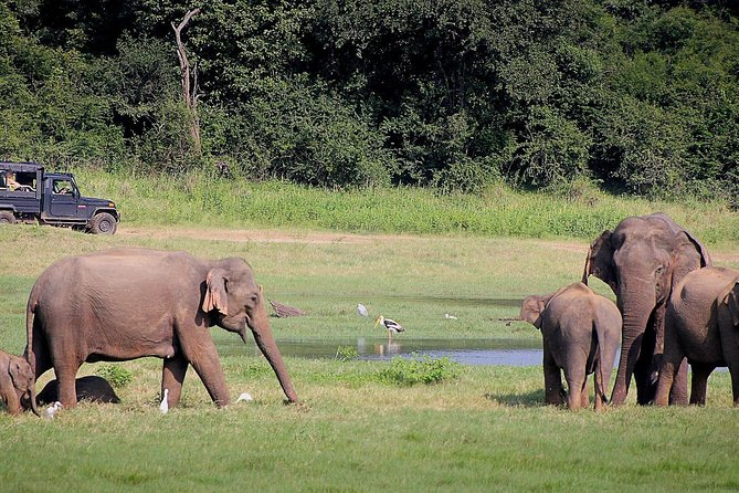 5-Day Sri Lanka at a Glance