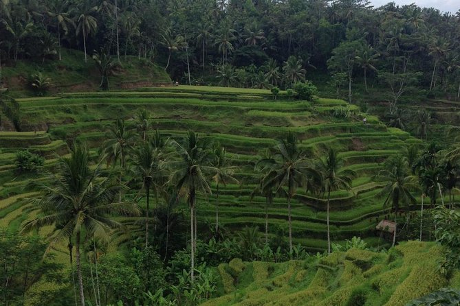 Favorite Sites of Ubud Daytrip