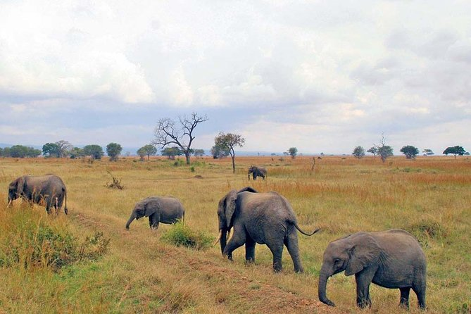 Mikumi National park 3 days safari from Dar es salaam