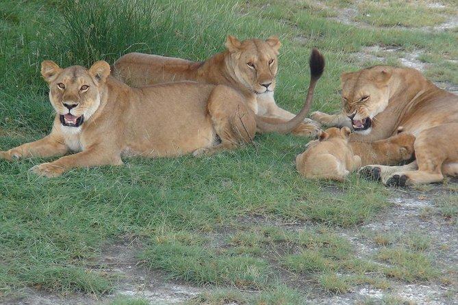 4 Days Tanzania classic safari