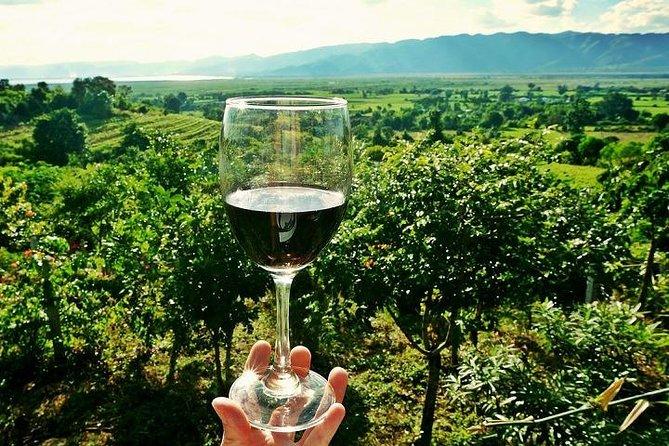 Half-Day Chianti Wine and Olive Oil Tour from Viareggio