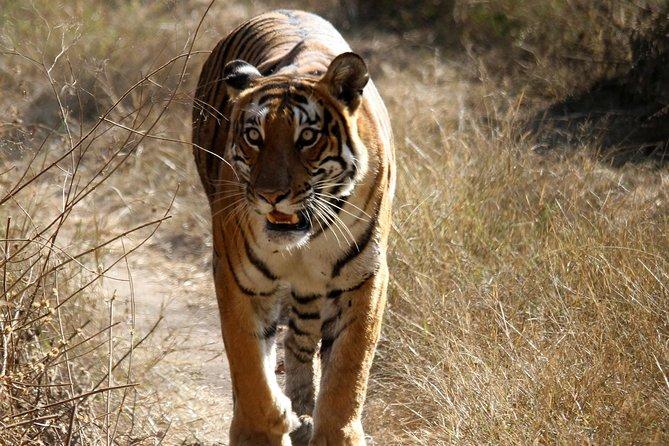 Khajuraho Erotica & Panna Exotica Wildlife