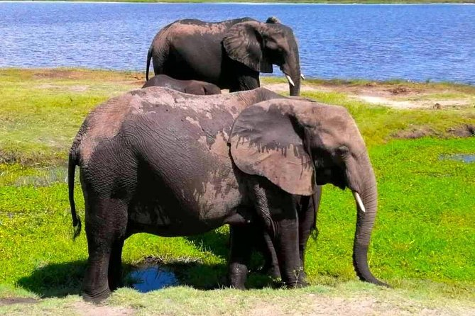 From Livingstone: Chobe Day Safari (Boat, Game Drive and Buffet Lunch)