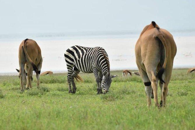 6 Days Tanzania National Parks Safari with Accommodation