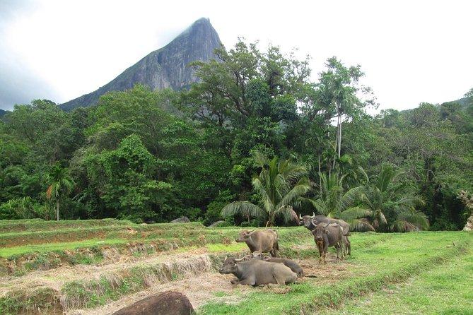 Knuckles Camping (Meemure Village)